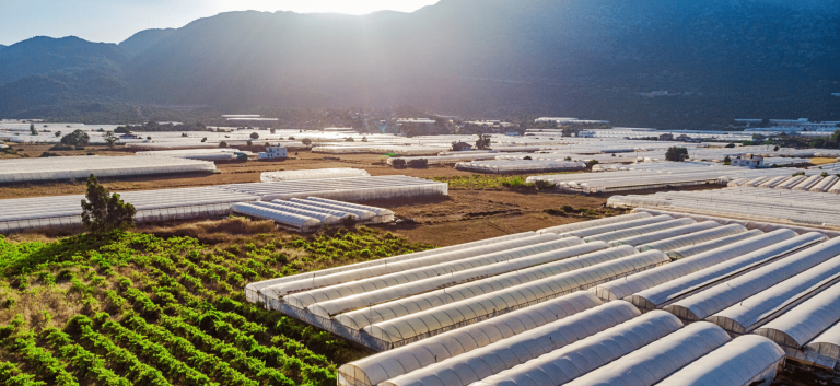 AIM Farmlands, agricultural investment in Turkey