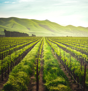 The Evolution of Farmland Investment in Turkey